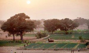 La iniciativa de la Gran Muralla Verde para el Sahara y el Sahel apoya a las comunidades locales en la gestión sostenible de las tierra.
