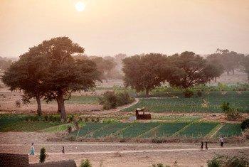 A Grande Muralha Verde continental tem 393 milhões de hectares de terras com potencial e oportunidades de restauração