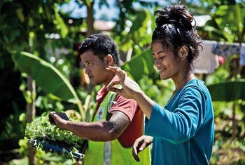 In Samoa, rising sea levels and storms affect the country's fragile agricultural sector, and the Red Cross Society runs a vegetable garden project to teach communities agriculture best practices.