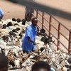 Un fermier avec son bétail au Hargeisa Livestock Market au Somaliland
