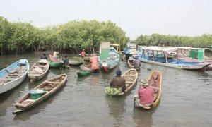 Pêche des huîtres en Gambie. Photo : PNUD Gambie