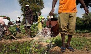 Un homme arrose des légumes dans le village de Kieryaghin, au Burkina Faso. Photo Banque mondiale/Dominic Chavez