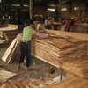 Manufacturing of plywood - one of the types of wood-based panels - in Hainan province, China.