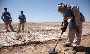 排雷人员正在阿富汗清理地雷。