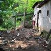 Una agricultora alimenta a sus animales en una granja familiar en Nicaragua
