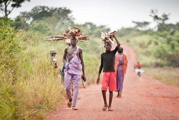 Men transporting wood in Bria, Central African Republic (CAR).