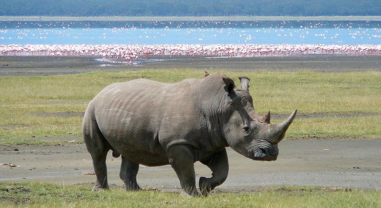 'Extinction crisis' pushes countries to agree stronger protection for global wildlife