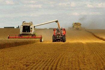 Une moissonneuses-batteuses récolte du blé dans un champ en France. Photo : FAO / Olivier Thuillier