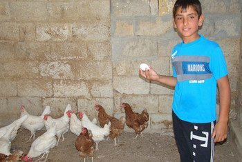 FAO is providing emergency livelihood support to improve food security of households affected by the ongoing Syrian crisis.