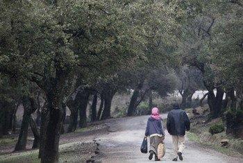 Un couple marche à travers une forêt, dans le Gouvernorat de Jendouba, en Tunisie. Photo : FAO / Giulio Napolitano