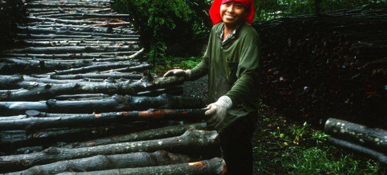 Más de 1.600 millones de personas en todo el mundo dependen de los bosques para su subsistencia, según DESA. Foto: FAO/J. Koelen