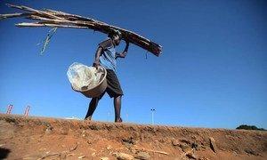 Un homme transportant de la canne à sucre au Mozambique. Photo FAO/Paballo Thekiso