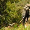 An elephant in Ghana. World Bank/Arne Hoel