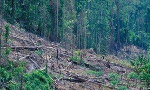 Une forêt endommagée en Indonésie. Photo : Banque mondiale / Curt Carnemark