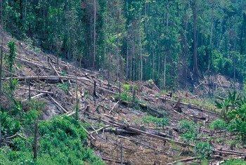 Леса покрывают более 30 процентов поверхности суши Земли и занимают около 4 миллиардов гектаров