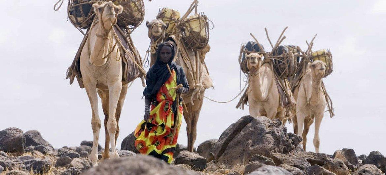A Kenyan camel herder collecting water.