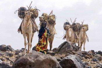 Une femmes avec des chameaux collectant de l'eau au Kenya. Photo FAO/Giulio Napolitano