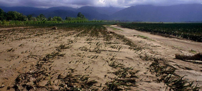 El cambio climático tiene serias repercusiones para la agricultura y la seguridad alimentaria. Foto: FAO/L. Dematteis