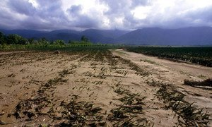 Climate change has serious implications for agriculture and food security.