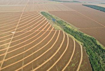 Plantações na Amazônia brasileira