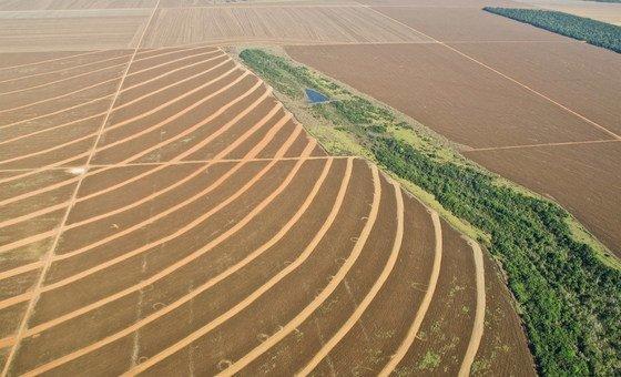 Brasil, Argentina, Paraguai e Uruguai, que formam o Mercosul, devem crescer em produção agrícola e pecuária.