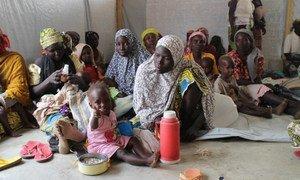 Des réfugiés dans le camp de Minawao, au Cameroun, après avoir fui la violence perpétée par Boko Haram dans le nord du Nigéria. Photo : PAM / Sofia Engdahl