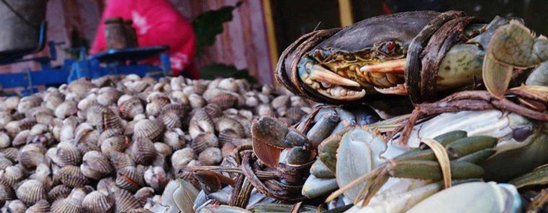 Más de 220 especies diferentes ingieren desechos microplásticos en condiciones naturales