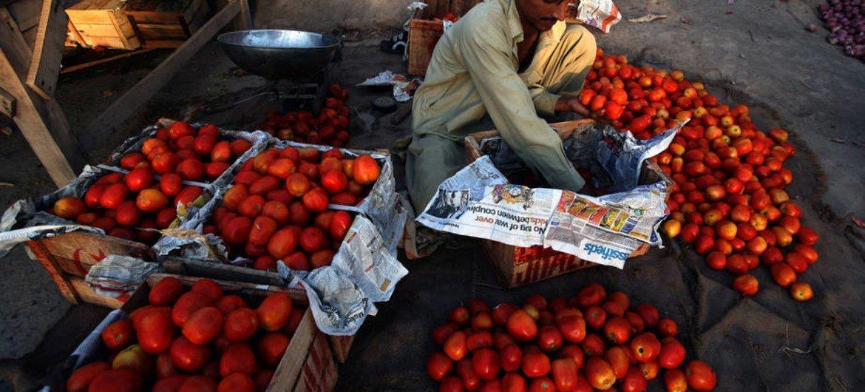 Tomates a la venta en un mercado en Multan, Paquistán. Foto: FAO/Asim Hafeez