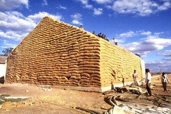Des stocks de maïs en Zambie. Photo : FAO / Alberto Conti