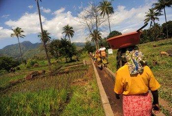 Mettre un terme à la faim une fois pour toutes devrait s'inscrire dans un mouvement mondial, selon le Directeur général de la FAO, José Graziano da Silva. Photo : FAO / Daniel Hayduk