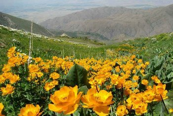 Аксу-Жабаглы в Казахстане. <br> Фото ЮНЕСКО/Евгений Белоусов