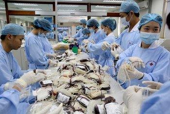 Фото Всемирного банка, медики обрабатывают донорскую  кровь во Вьетнаме
