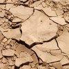La desertificación afectará la producción de alimentos. Foto de archivo: FAO/Jeanette Van Acker