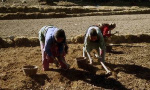 The 2015 earthquakes have disrupted farming activities in Nepal, threatening the livelihoods of rural families.