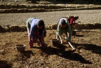 Des agriculteurs au Népal. Photo : FAO / Giampiero Diana