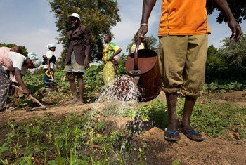 Members of the Cooperative Agriculture Maraicher for Boulbi, water and hoe their vegetable fields in Kieryaghin village, Burkina Faso.