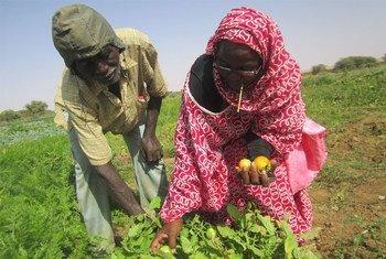 En Mauritanie, les membres d'une coopérative agricole (archives). Photo PNUD Mauritanie/Oumou Sow