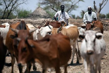 Des éleveurs au Soudan. Photo MINUAD/Albert Gonzalez