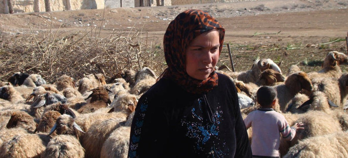Once a major contributor to Syria's domestic economy and external trade, the livestock sector is gravely affected by the conflict.