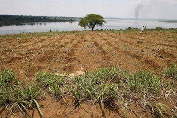Farmland along the banks of Rwanda's Lake Sake.