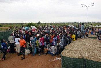 Desplazados de Shiluk en el Alto Nilo, acogidos por UNMISS en un sitio en Malakal. Foto; UNMISS