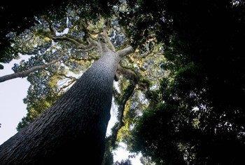 La ONU destacó el vínculo entre bosques y agua. Foto:  FAO/Giulio Napolitano