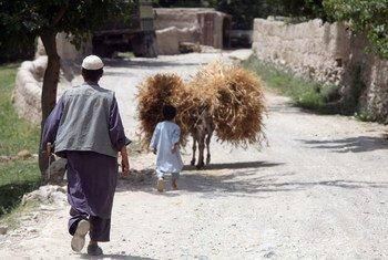 Un agriculteur afghan et son fils avec leur récolte de blé. Photo FAO/Giuilio Napolitano
