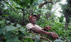 La gestion durable des forêts peut jouer un rôle dans l'éradication de la faim et lutter contre le changement climatique. Photo FAO/Simon Maina