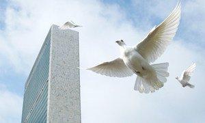 联合国总部放飞鸽子,作为纪念国际和平日仪式的一部分。
