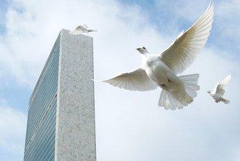 为庆祝国际和平日,联合国总部放飞和平鸽。(资料图片)
