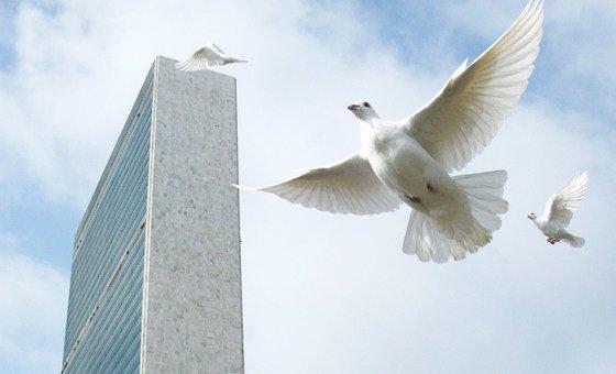 حمام السلام يتم إطلاقه في مقر الأمم المتحدة كجزء من الاحتفال باليوم الدولي للسلام.