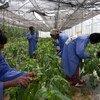 Expertos de todo el mundo discuten sobre las amenazas a las plantas vitales para la alimentación. Foto de archivo: Banco Mundial/Dominic Chavez