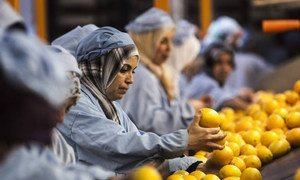 A citrus packing house in Morocco. One area of FAO's work with the WTO is on food safety standards.