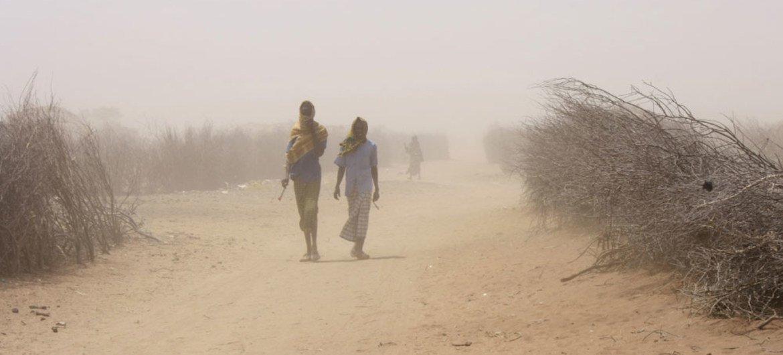 Desde 2011, Kenya ha registrado una sequía grave que exacerba la falta de seguridad alimentaria del país. Foto: Jaspreet Kindra/IRIN